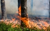 California wildfire forces evacuations